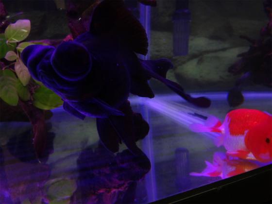 赤青LED