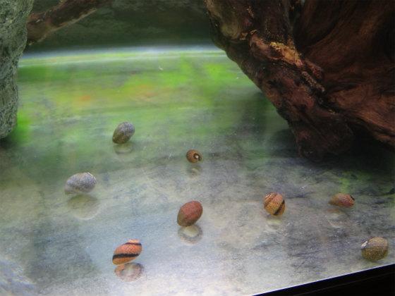 カラー石巻貝