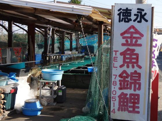 長洲の徳永養魚場