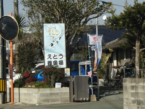 江藤養魚場