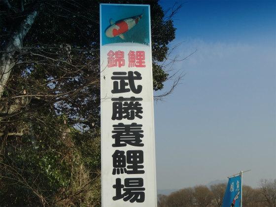 武藤養鯉場