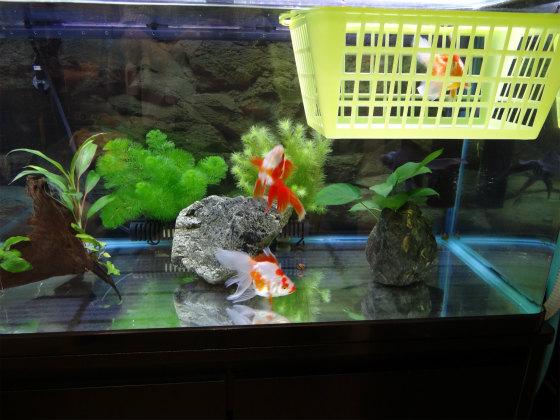 金魚のカゴ