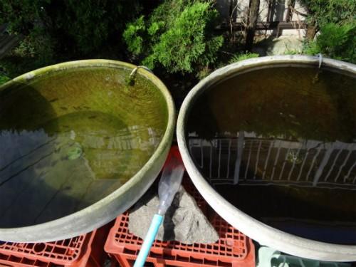 土佐錦丸鉢