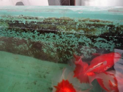 トロ舟の苔