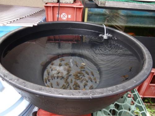 プラスチックの睡蓮鉢