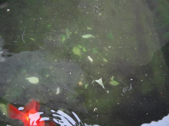 トロ舟に落ち葉