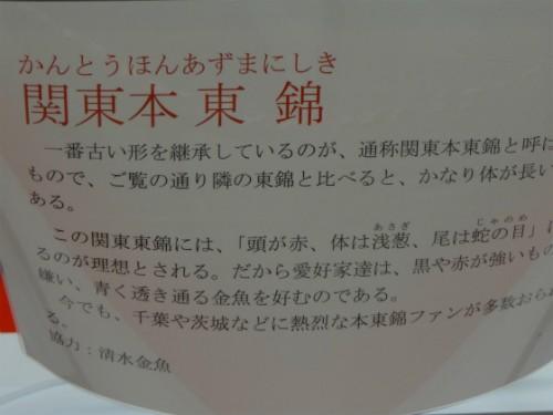 関東本東錦